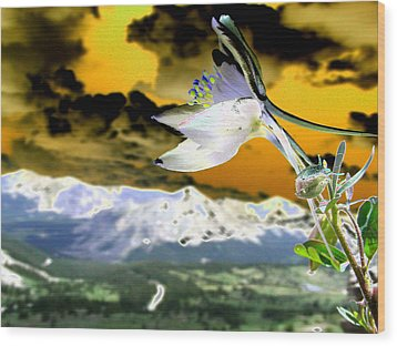 Petals To The Sky Wood Print by Peter  McIntosh