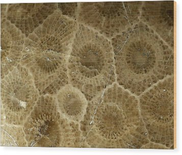 Petoskey Stone 3 Wood Print