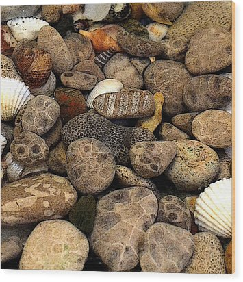 Petoskey Stones With Shells L Wood Print by Michelle Calkins