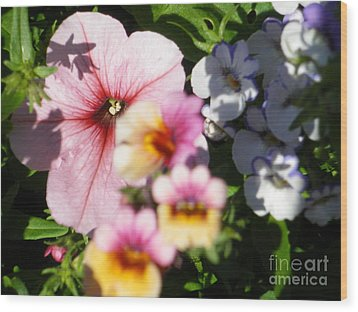 Petunia And Nemesia At Sunset Wood Print by Sonya Chalmers