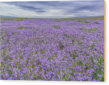 Wood Print featuring the photograph Phacelia Field And Clouds by Marc Crumpler