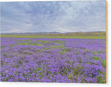 Wood Print featuring the photograph Phacelia Field by Marc Crumpler