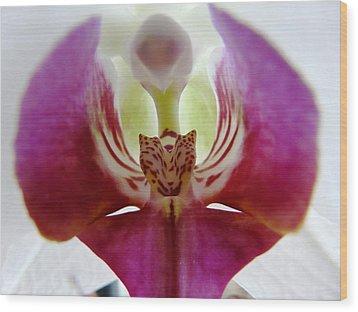 Phalaenopsis Orchid Detail Wood Print