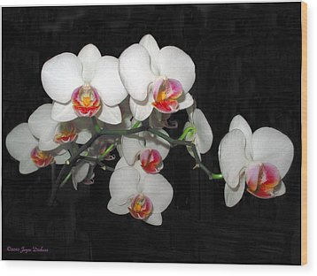 Phalaenopsis Orchids Wood Print