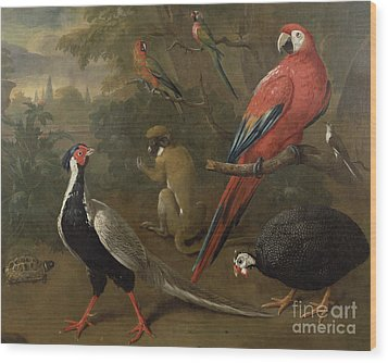 Pheasant Macaw Monkey Parrots And Tortoise  Wood Print