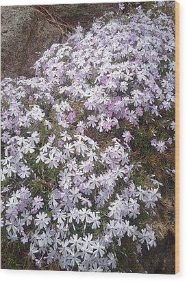 Phlox Blue Lilac Wood Print