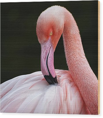 Phoenicopterus Wood Print by QuimGranell