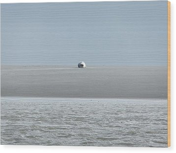 Wood Print featuring the photograph Phoque Blanc Roulant Au Banc by Marc Philippe Joly