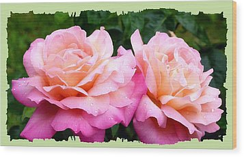 Wood Print featuring the photograph Photogenic Peace Roses by Will Borden