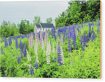Photographers Dream Or Allergy Nightmare Wood Print by Greg Fortier