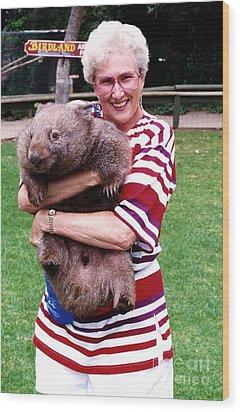 Phyllis Holding Thirty Lb Wombat Australia Wood Print by Phyllis Kaltenbach