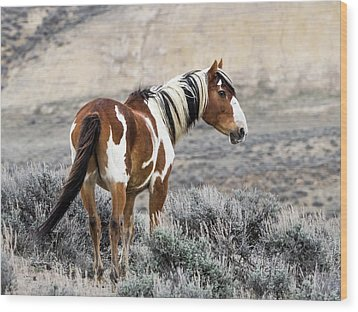 Picasso - Wild Mustang Stallion Of Sand Wash Basin Wood Print