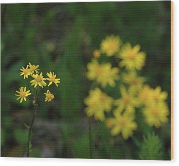 Wood Print featuring the photograph Pick Me Daisies by LeeAnn McLaneGoetz McLaneGoetzStudioLLCcom
