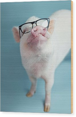 Pickle The Pig II Wood Print by Eli Warren