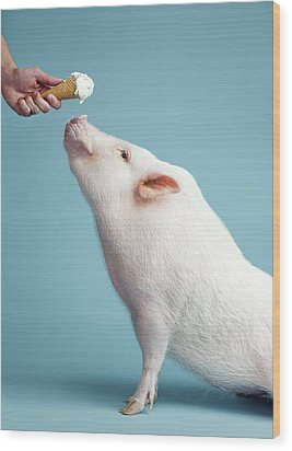Pickle The Pig IIi Wood Print by Eli Warren