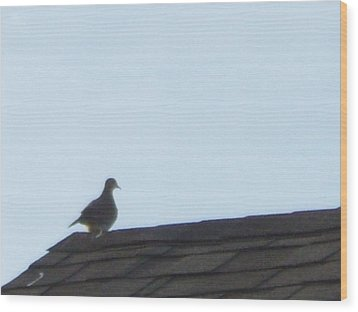 Picture Of A Pigeon Wood Print