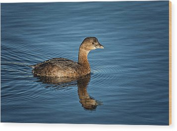 Wood Print featuring the photograph Pied Billed Grebe by Randy Hall