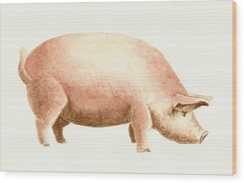 Pig Wood Print by Michael Vigliotti