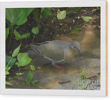 Wood Print featuring the photograph Pigeon by Felipe Adan Lerma