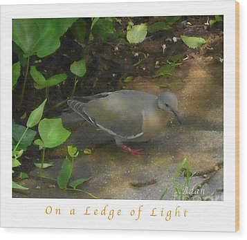Wood Print featuring the photograph Pigeon Poster by Felipe Adan Lerma