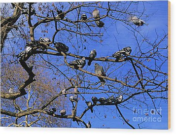 Pigeons Perching In A Tree Together Wood Print by Sami Sarkis