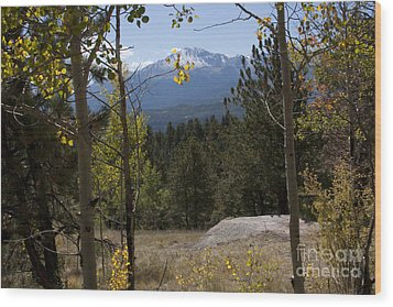 Wood Print featuring the photograph Pikes Peak Framed Aspens Landscape by Marta Alfred