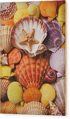 Pile Of Seashells Wood Print by Garry Gay