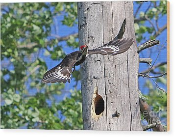 Pileated #27 Wood Print by James F Towne