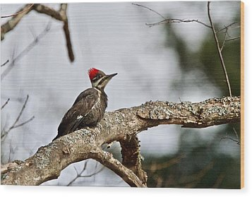 Wood Print featuring the photograph pileated Woodpecker 1068  by Michael Peychich