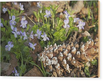 Pine Cone And Spring Phlox Wood Print by Michael Peychich