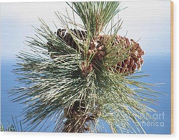 Pine Cones Over Lake Tahoe Wood Print by Carol Groenen