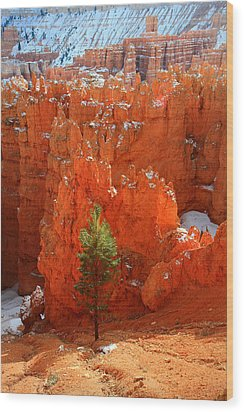 Pine Hoodoos At Bryce Canyon Wood Print by Pierre Leclerc Photography