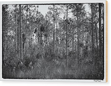 Pine Land In B/w Wood Print by Rudy Umans