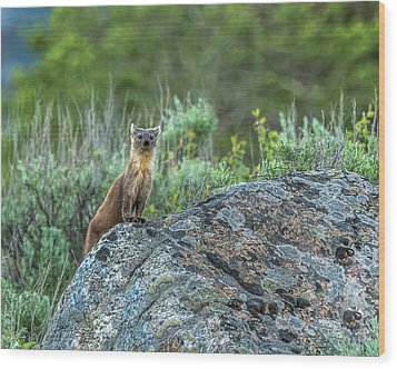 Wood Print featuring the photograph Pine Marten With Attitude by Yeates Photography