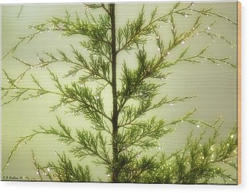 Wood Print featuring the photograph Pine Shower by Brian Wallace