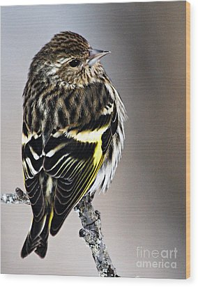 Pine Siskin Wood Print by Larry Ricker