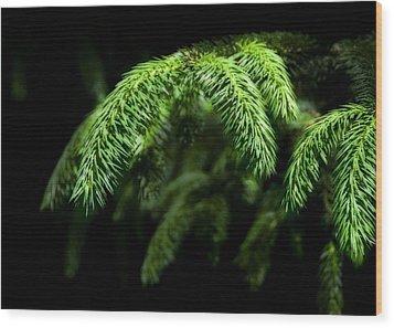 Pine Tree Brunch Wood Print by Svetlana Sewell