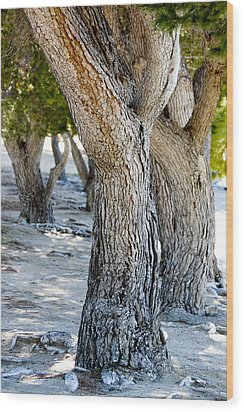 Wood Print featuring the photograph Pine Tree by Ivete Basso Photography