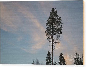 Pine Tree Silhouette Wood Print
