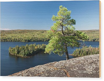 Wood Print featuring the photograph Pine Tree With A View by Elena Elisseeva