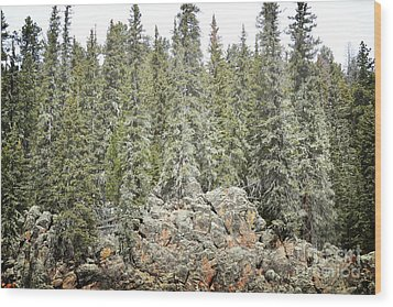 Wood Print featuring the photograph Pine Trees Rustic Mountain by Andrea Hazel Ihlefeld