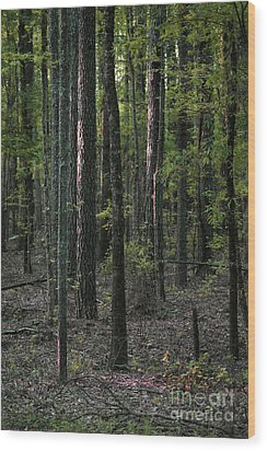 Wood Print featuring the photograph Pine Wood Sunrise by Skip Willits