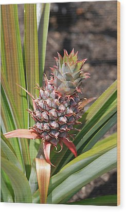 Pineapple Wood Print by Don  Wright