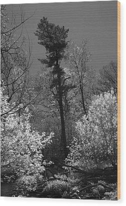 Pineing Away Wood Print