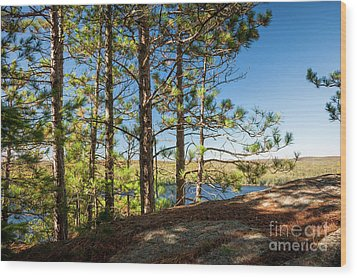 Wood Print featuring the photograph Pines On Sunny Cliff by Elena Elisseeva