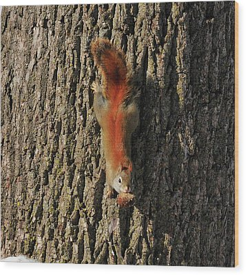 Piney Squirrel Wood Print by David Arment
