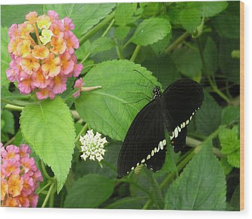 Pink And Black In The Garden Wood Print