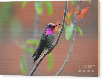 Pink And Gold Anna's Hummingbird Wood Print