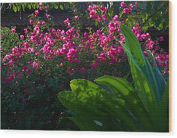 Wood Print featuring the photograph Pink And Green by Jim Walls PhotoArtist