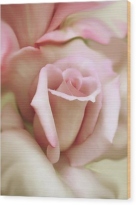 Pink And Ivory Rose Portrait Wood Print by Jennie Marie Schell